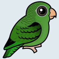 View more information about Barred Parakeet