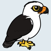 View more information about Black-and-white Hawk-Eagle