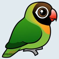 View more information about Black-cheeked Lovebird