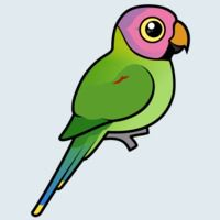 View more information about Blossom-headed Parakeet