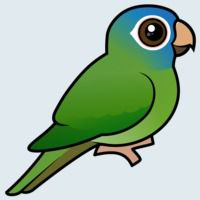 View more information about Blue-crowned Conure