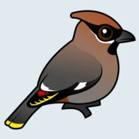 View more information about Bohemian Waxwing