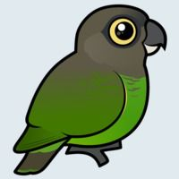 View more information about Brown-headed Parrot