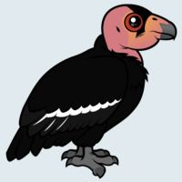 View more information about California Condor