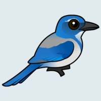 View more information about California Scrub-Jay