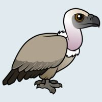 View more information about Cape Vulture