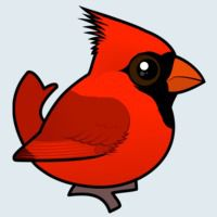 View more information about Northern Cardinal