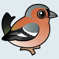 View more information about Chaffinch
