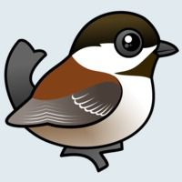 View more information about Chestnut-backed Chickadee