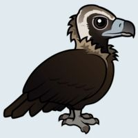 View more information about Cinereous Vulture