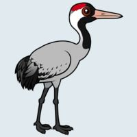 View more information about Common Crane