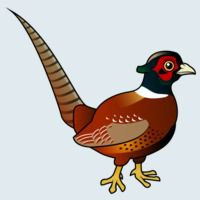 View more information about Common Pheasant