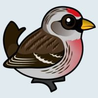 View more information about Common Redpoll