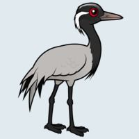 View more information about Demoiselle Crane