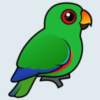 View more information about Eclectus Parrot