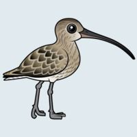 View more information about Eurasian Curlew