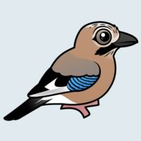 View more information about Eurasian Jay