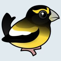 View more information about Evening Grosbeak