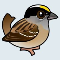 View more information about Golden-crowned Sparrow