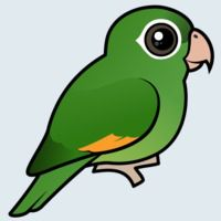 View more information about Golden-winged Parakeet
