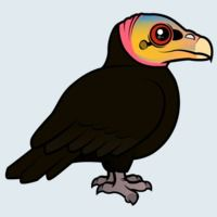 View more information about Greater Yellow-headed Vulture