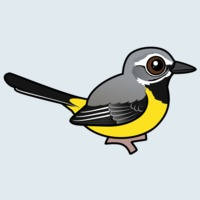 View more information about Grey Wagtail