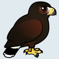 View more information about Harris Hawk