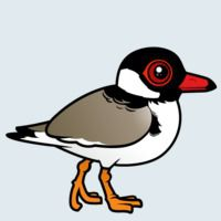 View more information about Hooded Plover