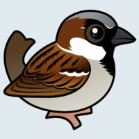 View more information about House Sparrow