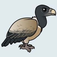 View more information about Indian Vulture