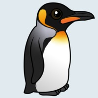View more information about King Penguin