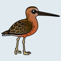 View more information about Long-billed Dowitcher
