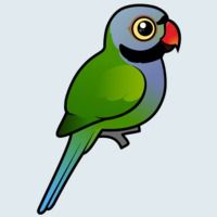 View more information about Lord Derby's Parakeet