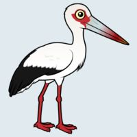 View more information about Maguari Stork