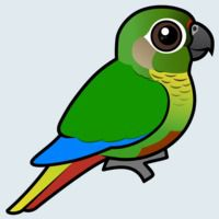 View more information about Maroon-bellied Parakeet