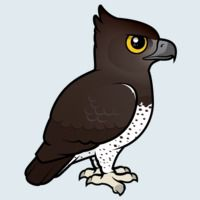 View more information about Martial Eagle