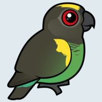View more information about Meyer's Parrot