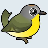 View more information about Nashville Warbler