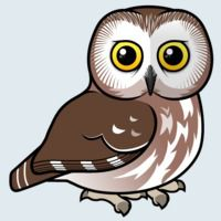 View more information about Northern Saw-whet Owl