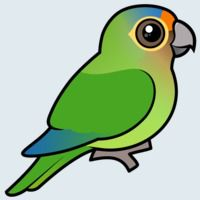 View more information about Orange-fronted Parakeet