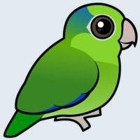 View more information about Pacific Parrotlet