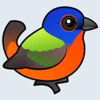 View more information about Painted Bunting