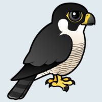 View more information about Peregrine Falcon