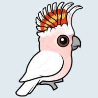 View more information about Pink Cockatoo