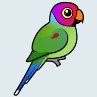 View more information about Plum-headed Parakeet