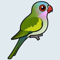 View more information about Princess Parrot