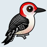 View more information about Red-bellied Woodpecker