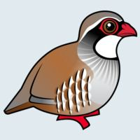 View more information about Red-legged Partridge
