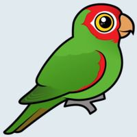 View more information about Red-masked Parakeet