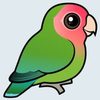 View more information about Rosy-faced Lovebird